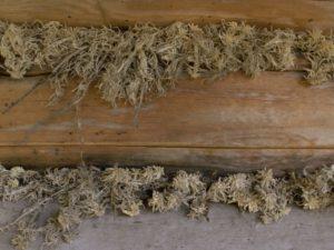 Фото: что лучше мох или пакля