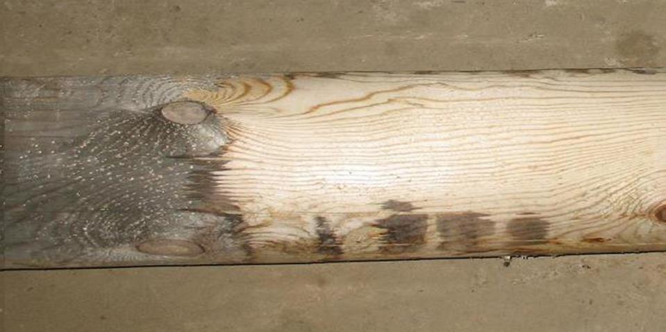 Фото: Процесс отбеливания дерева